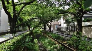 Sakurashinmachi old canal trees Tokyo